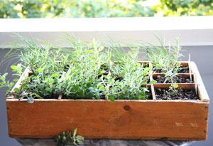 herbes-aromatiques-balcon-4